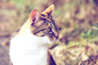 猫の写真・画像素材[317066]