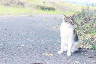 猫の写真・画像素材[317067]