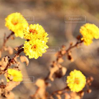 自然の写真・画像素材[351046]