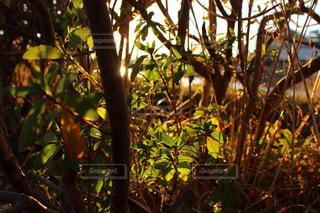 自然の写真・画像素材[351048]