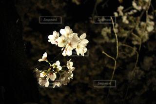 自然の写真・画像素材[432272]