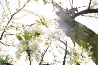花の写真・画像素材[475014]