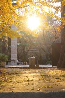 夕日さす公園の写真・画像素材[886380]