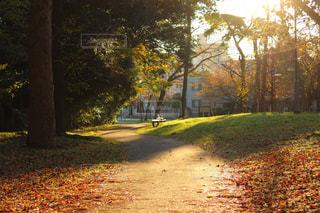 秋の公園の写真・画像素材[886382]
