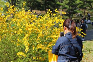 黄色の花の人の写真・画像素材[1147885]