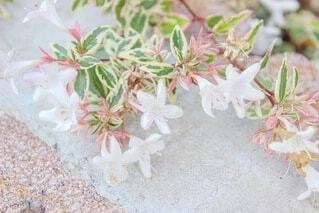 花のクローズアップの写真・画像素材[3988558]