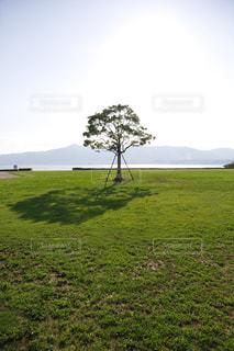 緑豊かな緑のフィールドに立っている一本の木の写真・画像素材[1700949]