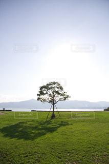 湖近くに緑豊かな緑のフィールドの木の写真・画像素材[1700950]