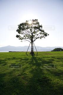 象徴的な一本の木の写真・画像素材[1700953]