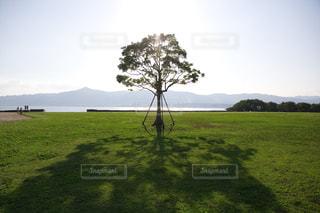 緑豊かな緑に立つ一本の木の写真・画像素材[1700954]