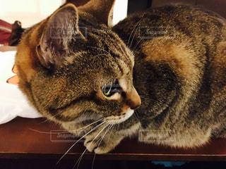 猫の写真・画像素材[314988]