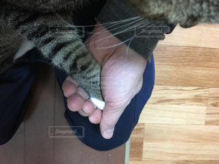 握手の写真・画像素材[282461]