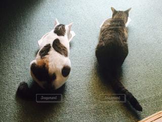 猫の写真・画像素材[280074]