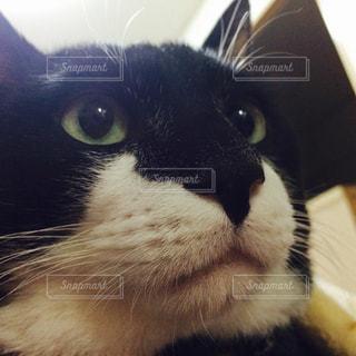 猫の写真・画像素材[280503]