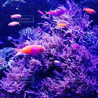 観賞魚の写真・画像素材[280537]