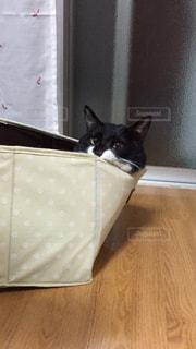 猫の写真・画像素材[410148]