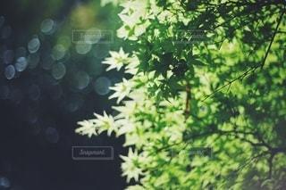 風景の写真・画像素材[4054]
