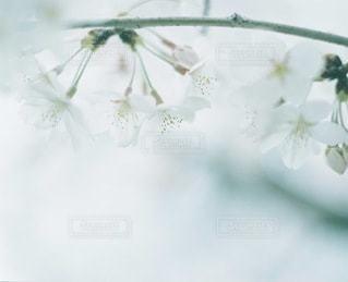 植物 - No.4047