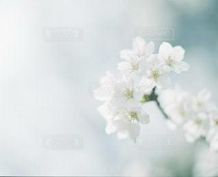 植物の写真・画像素材[4046]