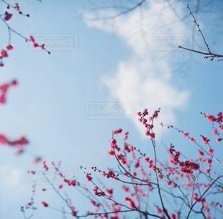 風景の写真・画像素材[4035]