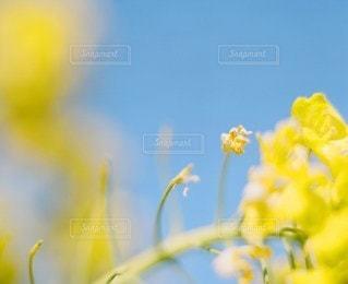 空の写真・画像素材[4034]
