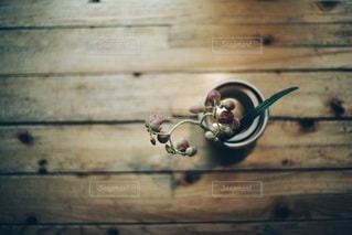 植物 - No.4027