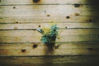 植物の写真・画像素材[4025]