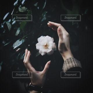 女性の写真・画像素材[4020]