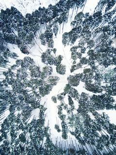 雪 - No.425764