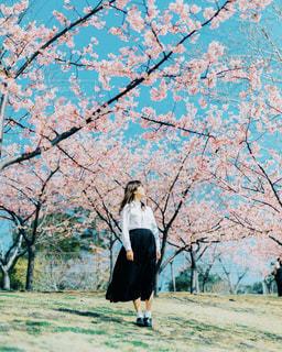 桜に立っている女性の写真・画像素材[2806034]