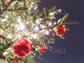 クリスマスの写真・画像素材[280547]
