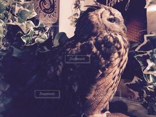 鳥の写真・画像素材[311222]