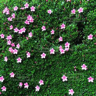 花の写真・画像素材[538554]