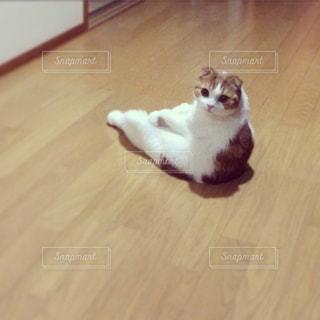 猫の写真・画像素材[280564]