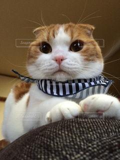 猫の写真・画像素材[280565]