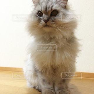 猫の写真・画像素材[280566]