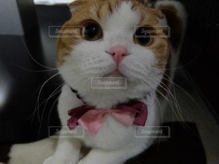 猫の写真・画像素材[280656]