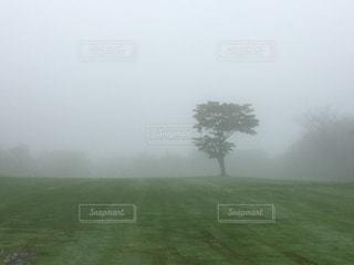 木の写真・画像素材[321594]
