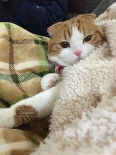 猫の写真・画像素材[322314]