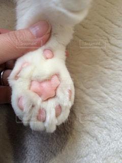 猫の写真・画像素材[322316]