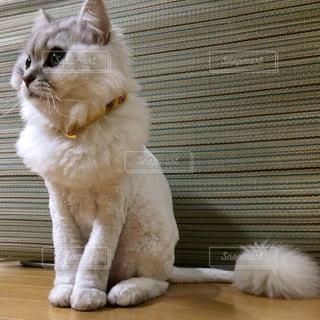 猫の写真・画像素材[322317]