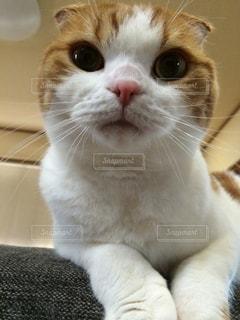 猫の写真・画像素材[322322]