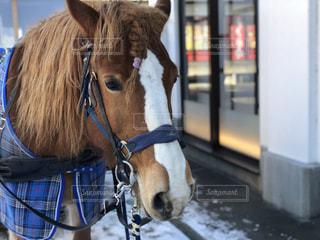 近くに馬のアップの写真・画像素材[1022310]