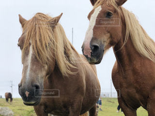 近くにフィールドに立っている茶色の馬のアップの写真・画像素材[1446463]