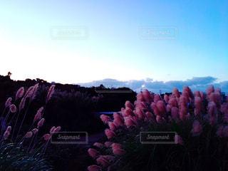 自然の写真・画像素材[280578]