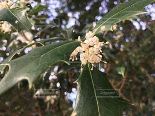 花の写真・画像素材[287258]