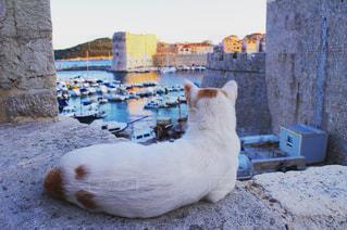 猫の写真・画像素材[307988]