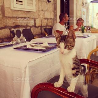猫の写真・画像素材[312335]