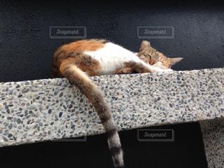 猫の写真・画像素材[280842]