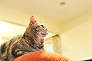 猫の写真・画像素材[280877]